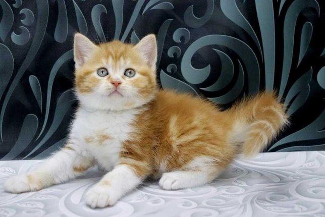 Котик красавчик мальчик