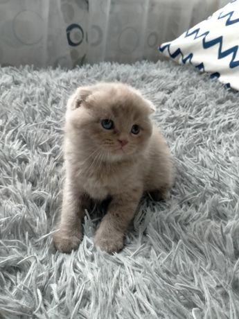 Котик мальчик веслоушка