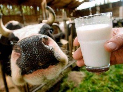 Сухое молоко Лактивит для телят и поросят,сыворотка сухая ЗЦМ