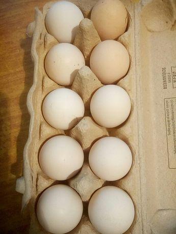 Jajka ze wsi - z wolnego wybiegu od 60gr/szt