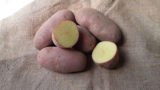 Ziemniaki Smaczne Żółte Red Lady