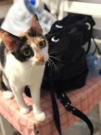 Przepiękna kotka Mróweczka szuka domu wspólnie z kocią córką