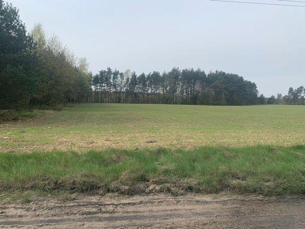 Sprzedam działkę budowlaną 3km. od węzła S8 Skierniewice - Rawa Maz.