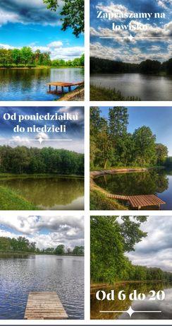 Łowisko komercyjne kameralne/wielkopolska,wędkarstwo karpiowe/weekend