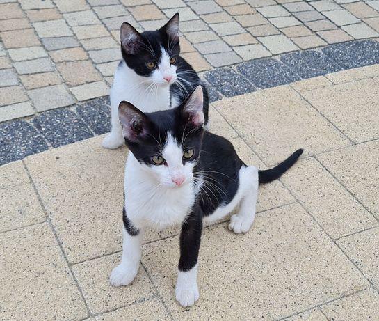 Oddam w dobre ręce młode koty, małe kotki