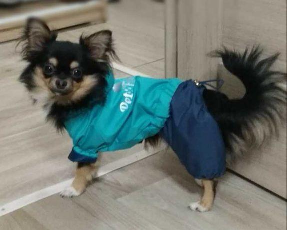 Дождевик Pet Fashion для маленькой собачки