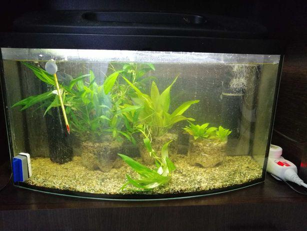 Akwarium 60l z wyposażeniem (filtr aquael fan-1 plus )