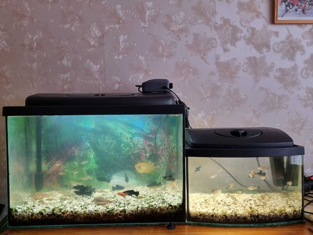 Akwarium 72 litry + akwarium 25 litrów + rybki + osprzęt + gratisy