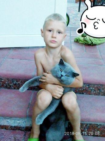 Вязка кошек 350гривен
