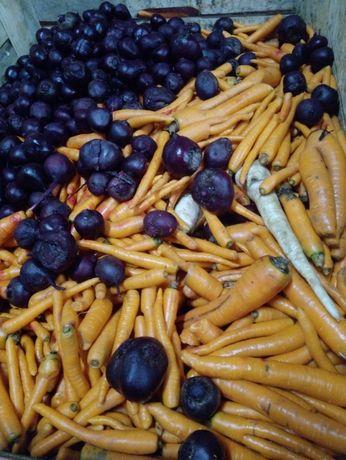 Odpady marchewki myte skrzynia 40zł