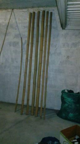 Várias Canas de bambú