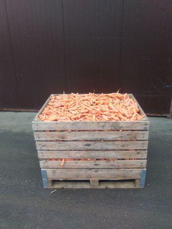 marchew odpadowa paszowa sprzedam tanio