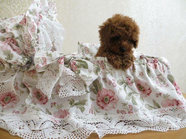Очаровательные Teddy