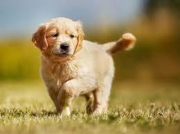 Выгул собак любого размера