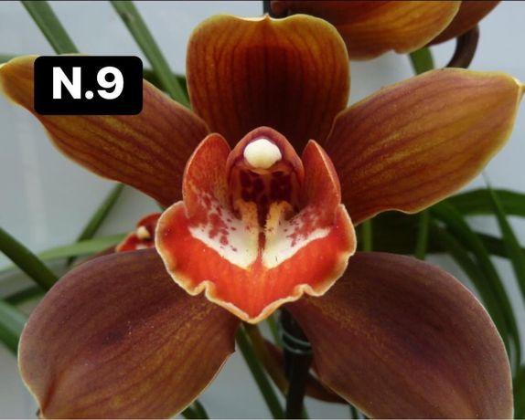 Orquideas coleçao 4-20€
