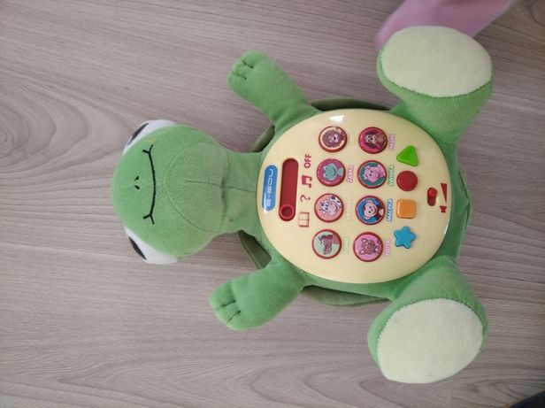 Żółw Albert