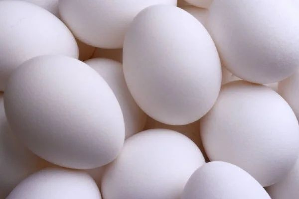 Акция! Инкубационные яйца Росс 708