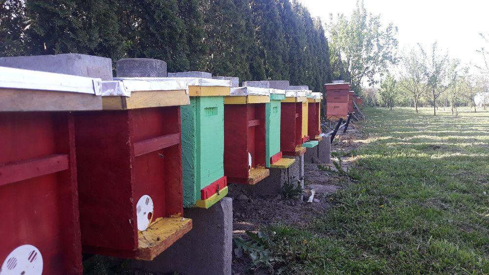 Odkłady pszczele 5 ramkowe (r. wielkopolska) Wiaderno - image 1