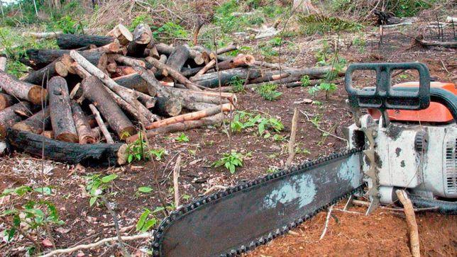 Corte e abate de árvores. Limpeza de terrenos sob orçamento