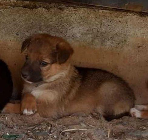 Маленькие щенки ищут семьи - давайте поможем им вместе
