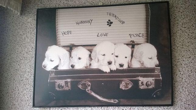 Obraz pieski białe owczarki w walizce retro vintage sepia fotografia