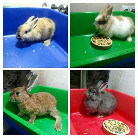 Разные кролики