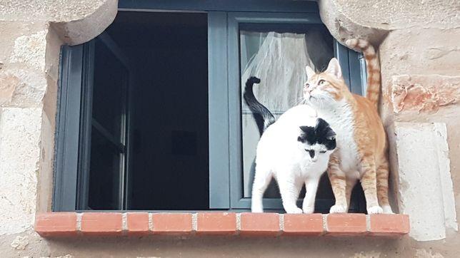 Casal de Gatinhos para adopção