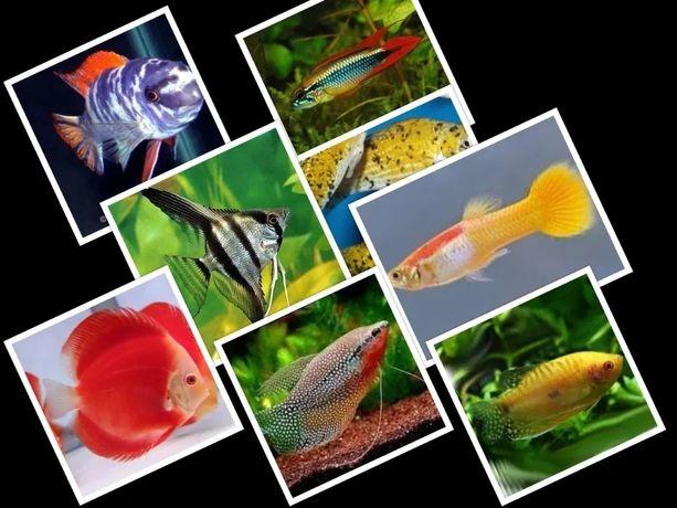 Ryby akwariowe ponad 500 gatunków w ofercie