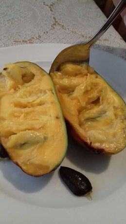 Саженцы Хурма-виргинская морозостойкая , Азимина , Инжир .
