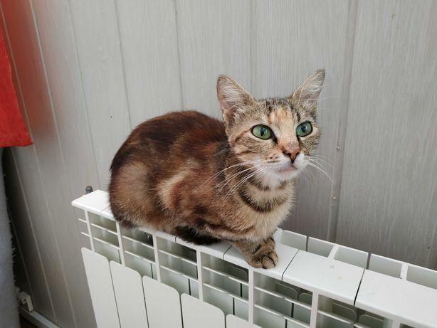 Śliczna koteczka czeka na dom