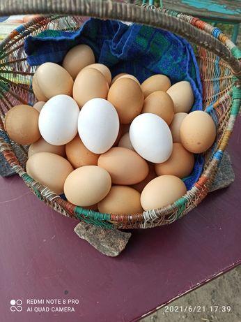 Продаю домашни куринные яйця по 45 грв