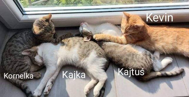 Kociaki słodziaki