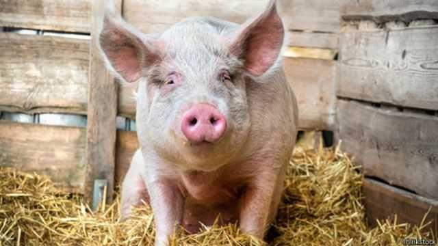 Продається свинина