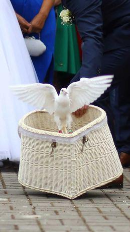 Białe gołębie na śluby i nie tylko !!
