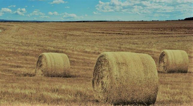 Sprzedam gospodarstwo rolne (ziemia z zabudowaniami)