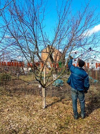 ВЕСЕННЯЯ ОБРЕЗКА сада, садовых деревьев, САДОВНИК уход за садом