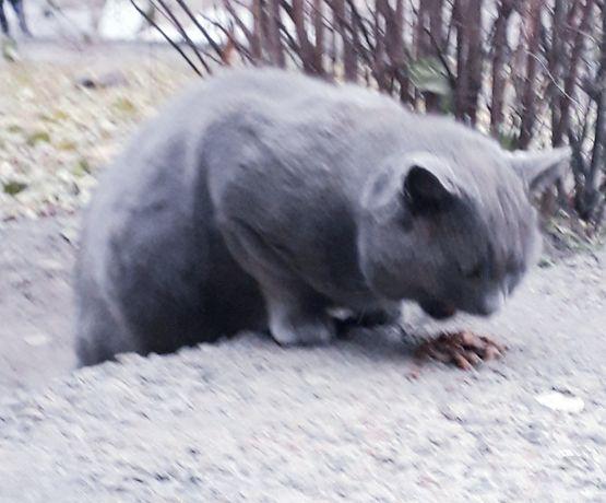 Замечен кот