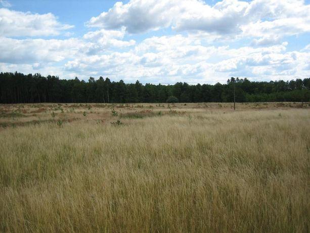 Sprzedam dzialke 70,000 tys. m² w obszarze lesnym Rogi - Gorzow Wlp.
