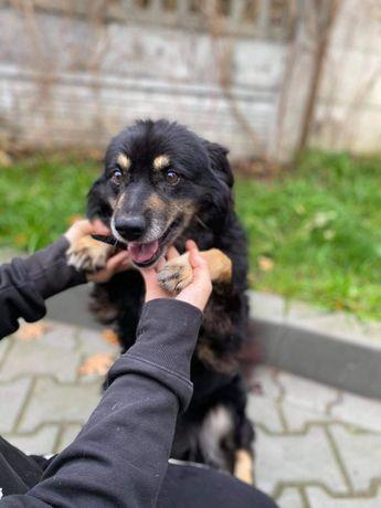 Vico - kochany psiak szuka domu!
