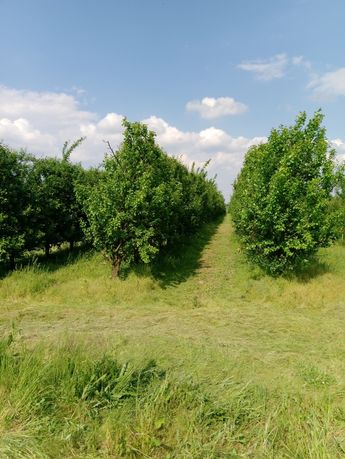 Działka rolna ok 2.5 ha