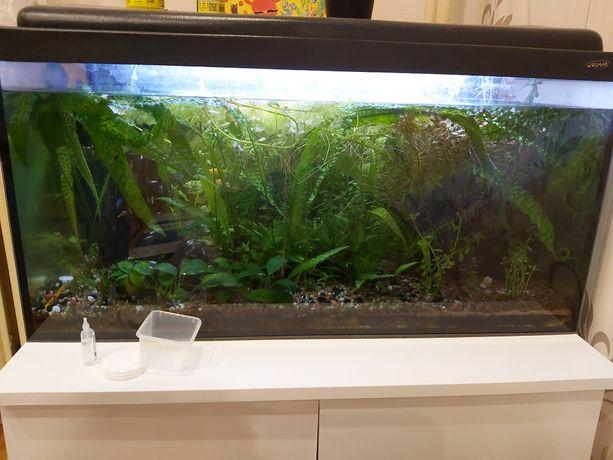 Rośliny akwarowe - rozne rodzaje anubias, kryptokoryna. Gratis rybki
