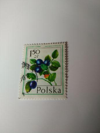Znaczek pocztowy, borówka czarna