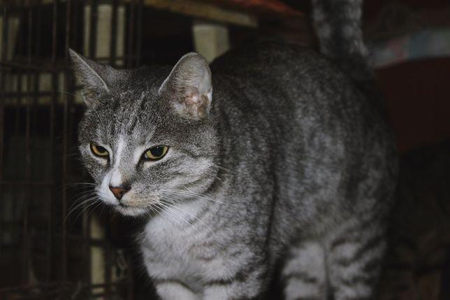 Kotki do adopcji - Karol i Koki