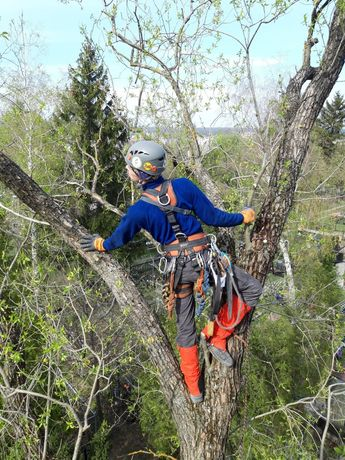 Обрезка спил срез кронирование удаление удалить дерево спилить дерево