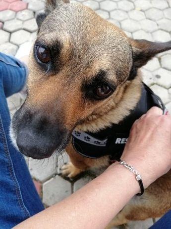 Rysia malutka sunia wielkości jamnika Fundacja psi azyl