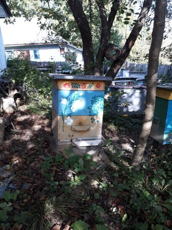 Вулики з бджолами