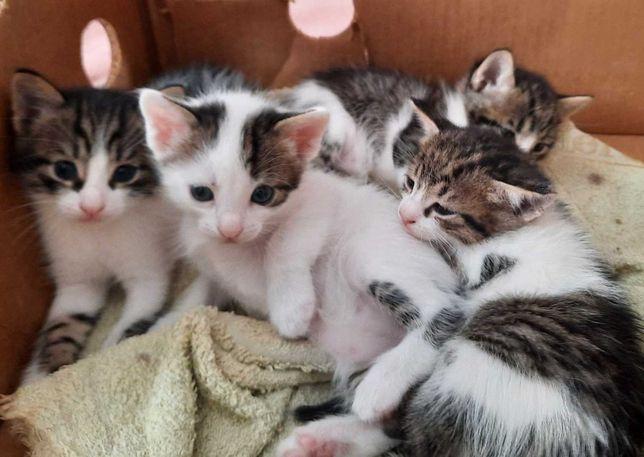 Котёночки мальчики и девочки
