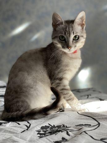 Киця шукає Котика для в'язки