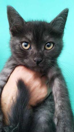 Очень красивые котята в добрые руки