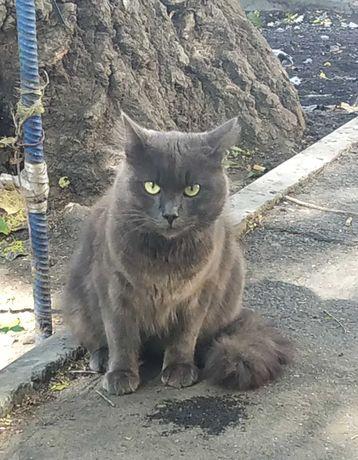 Найден Серый Кот, центр, площадь Толстого